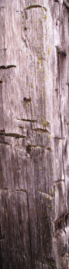 Reclaimed Hand Hewn Timber